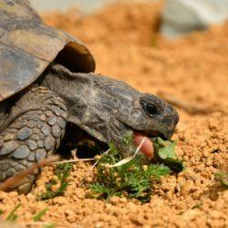 Landschildkröten sind aus dem Winterschlaf erwacht