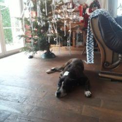 Auch alteingesessene Hunde konnten das Tierheim verlassen