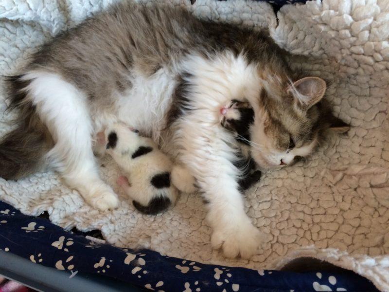Pflegestellen zur Aufzucht von Katzenwelpen gesucht