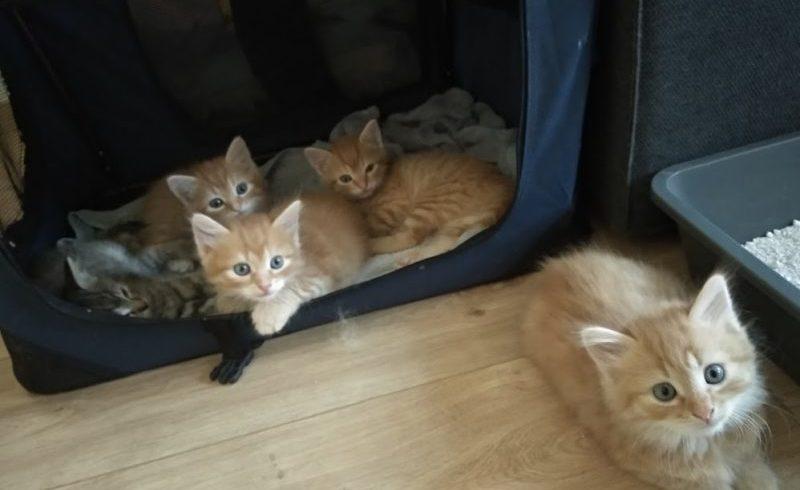Auch in diesem Jahr benötigen wir Pflegestellen für die Aufzucht von Katzenwaisen und die Beherbergung von Katzenfamilien