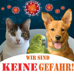 Corona – KEINE Gefahr durch Haustiere
