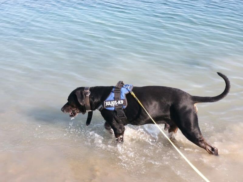 Hunde gehen baden…