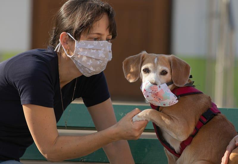 Tiervermittlung unter Coronabedingungen ab 1. November 2020