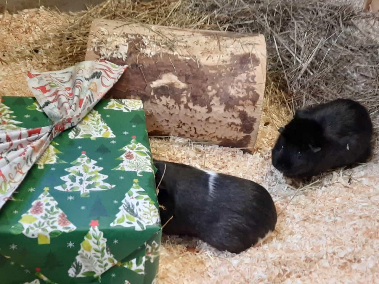 Wir wünschen schöne Weihnachten und ein gutes Neujahr