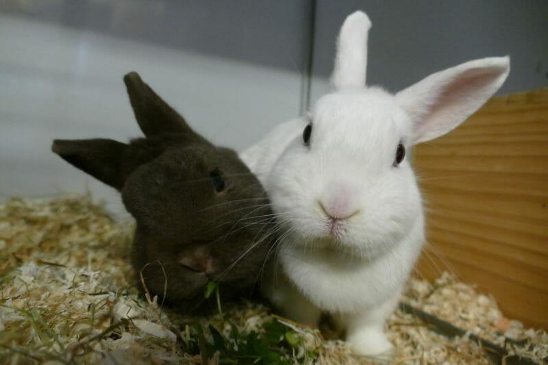 Heidi und Louis