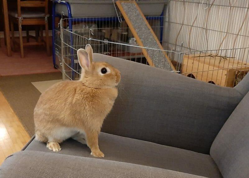 Kaninchendame will nicht ins Tierheim