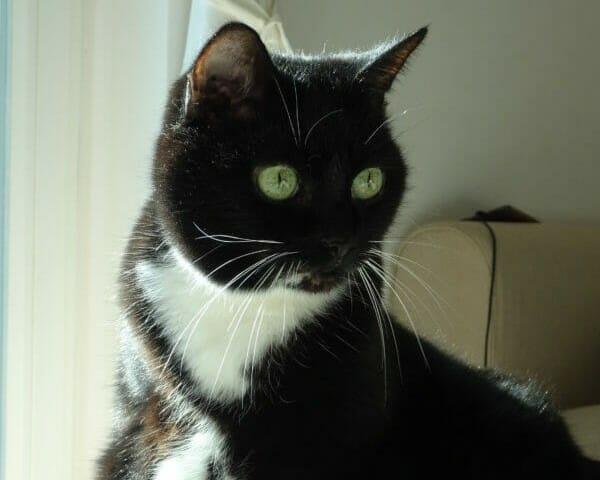 Katze Molly möchte nicht wieder ins Tierheim