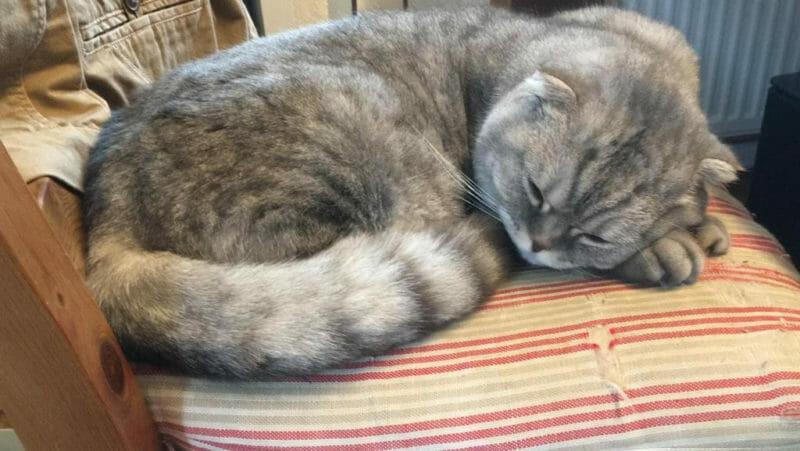Bildschöne Katzendame sucht neuen Wirkungskreis ohne Tierheimaufenthalt
