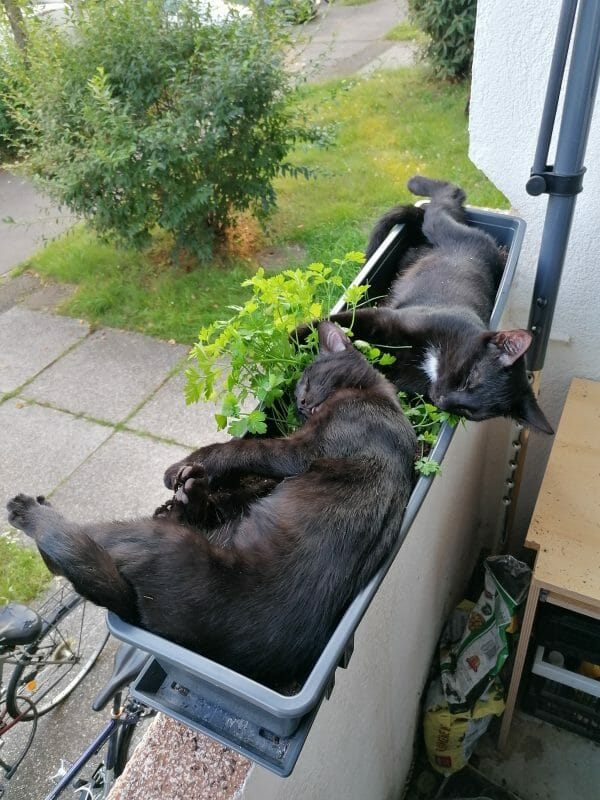 Wasja und Nikita suchen ein neues Zuhause ohne Zwischenstopp im Tierheim